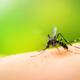disinfestazione zanzara