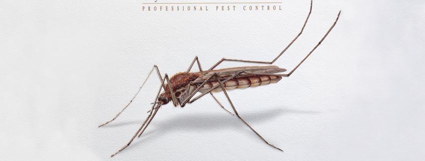 zanzara comune disinfestazione
